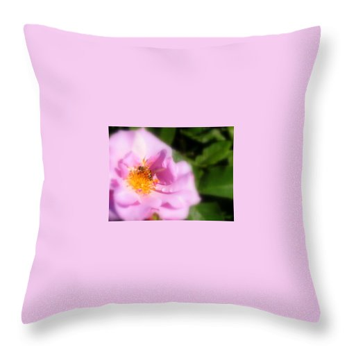 Lavendar Rose Throw Pillow featuring the photograph Lavendar Rose With Bee by Jacqueline Russell