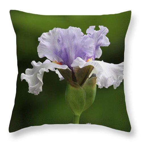 Bearded Iris Throw Pillow featuring the photograph Lavender Bearded Iris #2 by Judy Whitton
