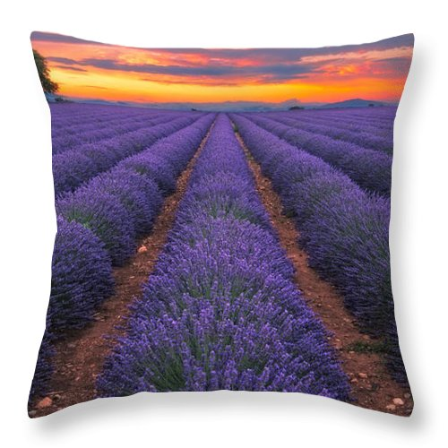 Dream Throw Pillow featuring the photograph Lavender Dream France by Andre Distel