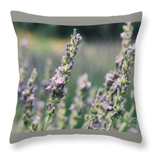 Flowers Throw Pillow featuring the painting Lavender by Eric Schiabor