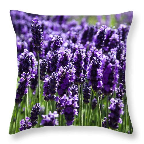 Photo Throw Pillow featuring the photograph Lavender Field by David Patterson