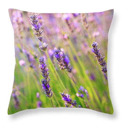 Natallia Macheda Throw Pillow featuring the photograph Lavender Field by Natalia Macheda
