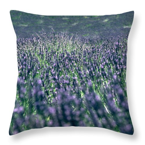 Lavender Throw Pillow featuring the photograph Lavender by Flavia Westerwelle