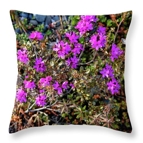 Plant Throw Pillow featuring the photograph Lavender In The Wild by David Crewdson