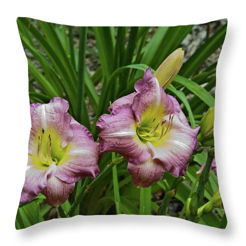 Lavender Throw Pillow featuring the photograph Lavender Lily Triad by Douglas Barnett