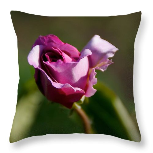 Flower Throw Pillow featuring the photograph Lavender Rose by Toni Berry