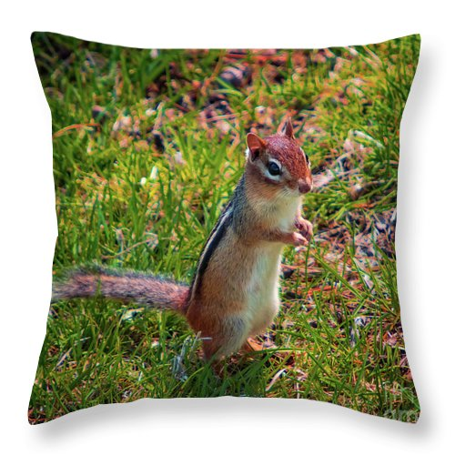 Animal Throw Pillow featuring the photograph Lawn King by Joe Geraci