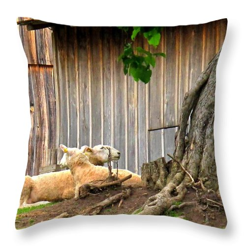 Sheep Throw Pillow featuring the photograph Lawnmowers At Rest by Ian MacDonald