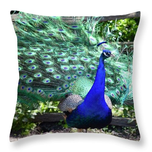 Peacock Throw Pillow featuring the photograph Le Peacock by Kandi Neussendorfer