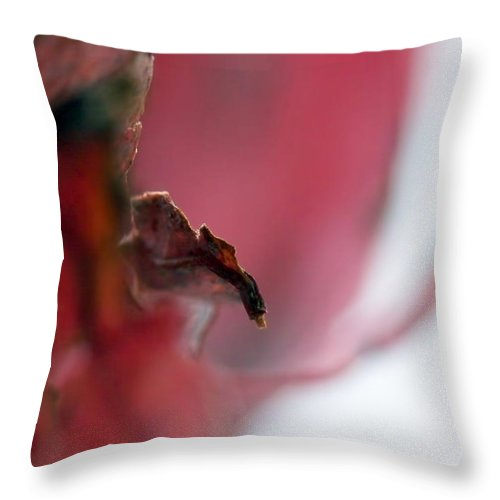Abstract Throw Pillow featuring the photograph Leaf Abstract II by Lauren Radke