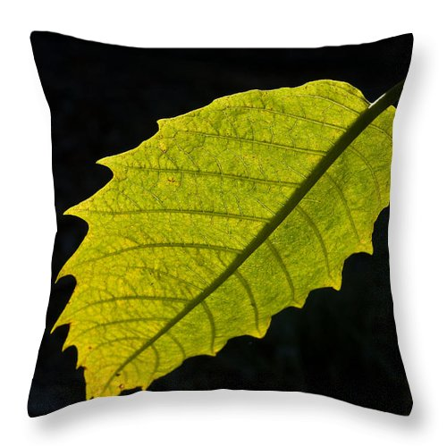 Cumberland Throw Pillow featuring the photograph Leaf Aglow by Douglas Barnett