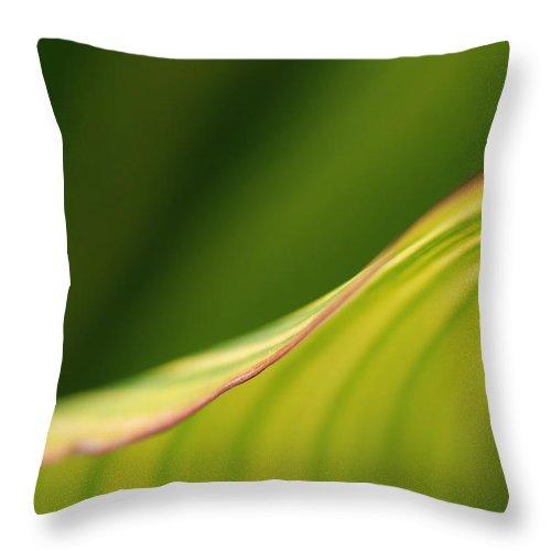 Macro Throw Pillow featuring the photograph Leaf by Catherine Lau