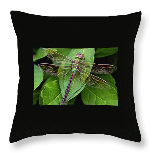 Dragonfly Throw Pillow featuring the photograph Leaf Poser by Cindy Vondran