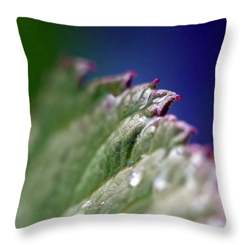 Abstract Throw Pillow featuring the photograph Leaf Study Vi by Lauren Radke
