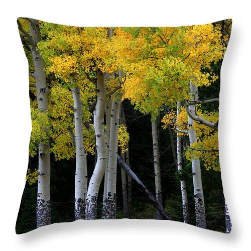 Aspens Throw Pillow featuring the photograph Leaning Aspen by Timothy Johnson
