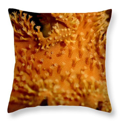 Underwater Throw Pillow featuring the photograph Leather Coral by Anthony Jones