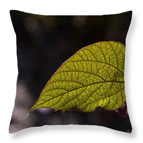 Leaf Throw Pillow featuring the photograph Leav Venation by Douglas Barnett