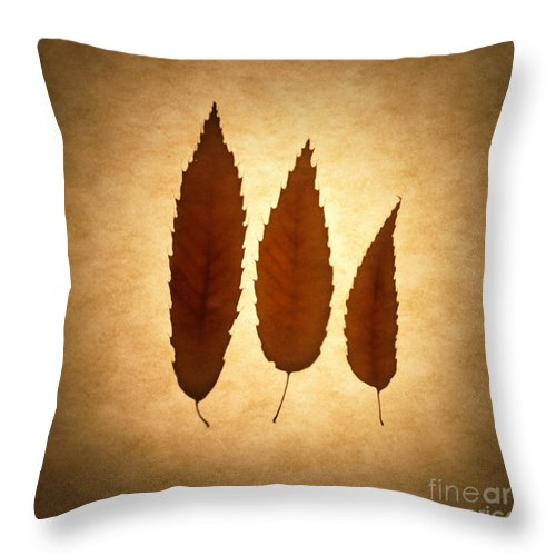 Leaf Throw Pillow featuring the photograph Leaves by Tony Cordoza