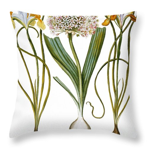 1613 Throw Pillow featuring the photograph Leek And Irises, 1613 by Granger