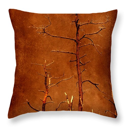 Dipasquale Throw Pillow featuring the photograph Left Bare And Broken by Dana DiPasquale