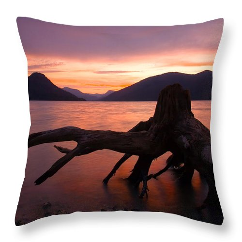 Stump Throw Pillow featuring the photograph Left Behind by Mike Dawson
