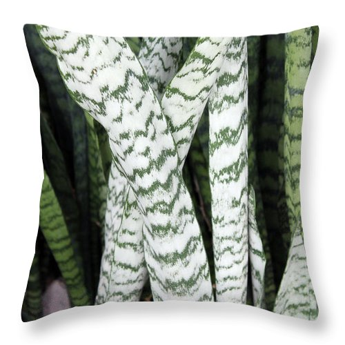Nature Throw Pillow featuring the photograph Legs by Munir Alawi