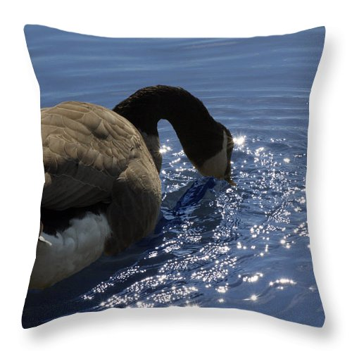 Canada Goose Throw Pillow featuring the photograph Leisure Time by Cathy Beharriell