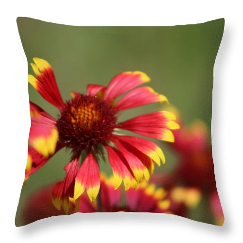 Coneflower Throw Pillow featuring the photograph Lemon Yellow and Candy Apple Red Coneflower by Colleen Cornelius