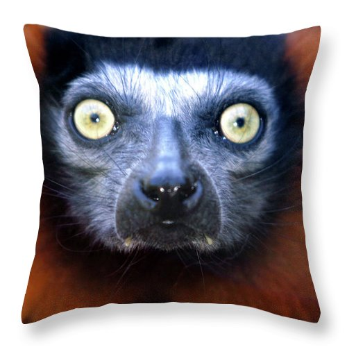 Animal Throw Pillow featuring the photograph Lemur Glare by Alan Look