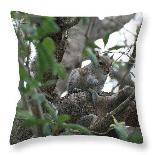 Squirrel Throw Pillow featuring the photograph Lending A Helping Hand by Rob Hans