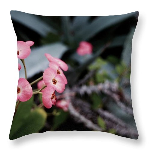 Tiwago Throw Pillow featuring the photograph Lent by Photography by Tiwago