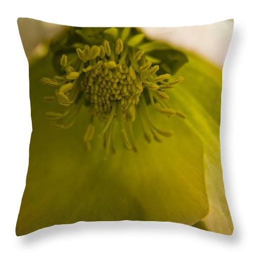 Flower Throw Pillow featuring the photograph Lenten Rose Interior by Teresa Mucha