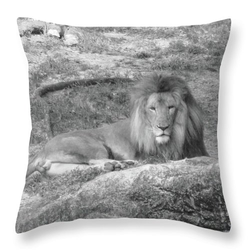 Lion Throw Pillow featuring the photograph Leo The Lion..... by WaLdEmAr BoRrErO
