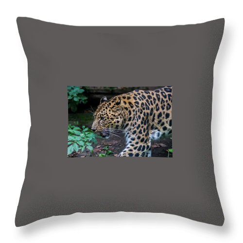 Leopard Throw Pillow featuring the photograph Leopard by Mattia Trentini