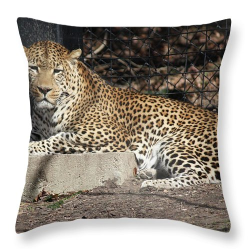 Maryland Throw Pillow featuring the photograph Leopard Relaxing by Ronald Reid