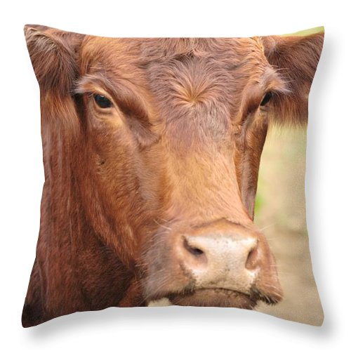 Leroy Throw Pillow featuring the photograph Leroy by Michelle DiGuardi