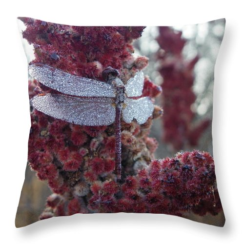 Bugs Throw Pillow featuring the photograph Let Me Sleep A Little Longer by Peggy King