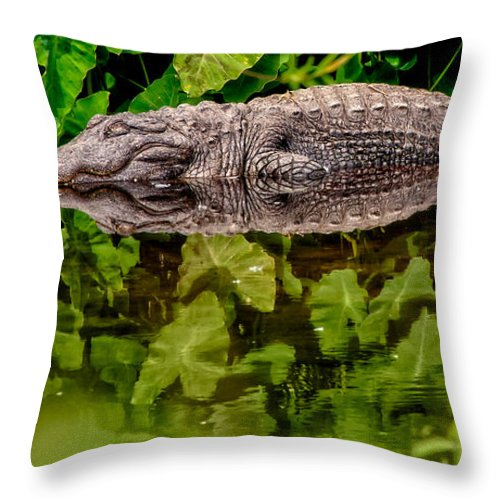 Alligator Throw Pillow featuring the photograph Let Sleeping Gators Lie by Christopher Holmes