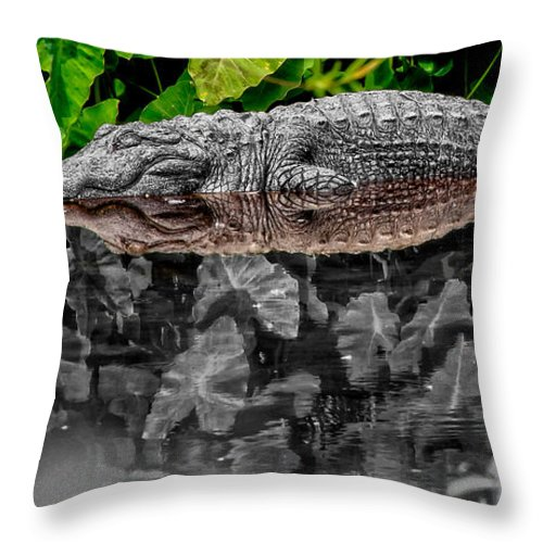 American Throw Pillow featuring the photograph Let Sleeping Gators Lie - Mod by Christopher Holmes