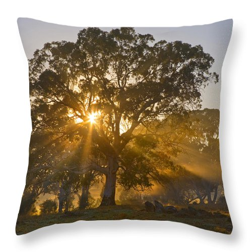 Tree Throw Pillow featuring the photograph Let There Be Light by Mike Dawson