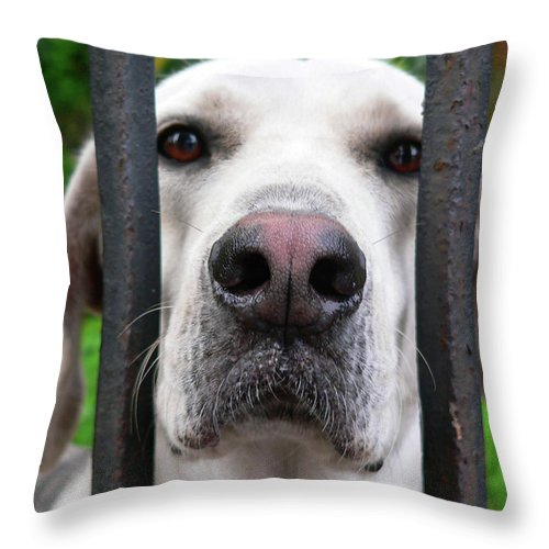 Dog Throw Pillow featuring the photograph Lets Go For A Walk by Angela Wright