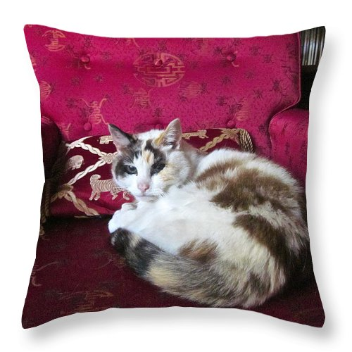 Photograph Of Cat Throw Pillow featuring the photograph Librarian by Gwyn Newcombe