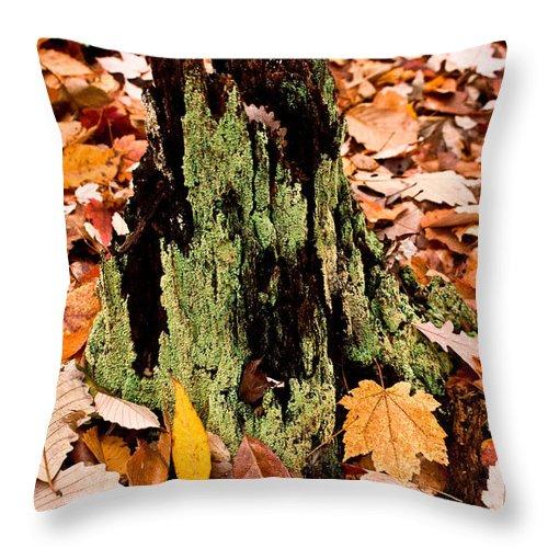 Lichen Throw Pillow featuring the photograph Lichen Castle In Autumn Leaves by Douglas Barnett