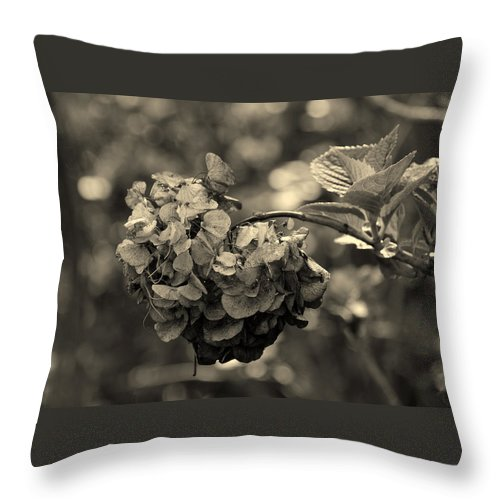 Life And Death Throw Pillow featuring the photograph Life And Death by Susanne Van Hulst