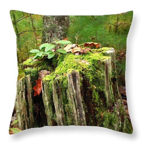 Landscape Throw Pillow featuring the photograph Life Goes On by Todd Blanchard