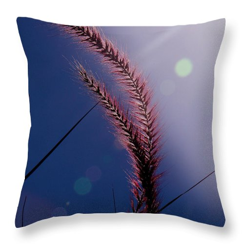 Fountain Grass Throw Pillow featuring the photograph Life by Joseph G Holland