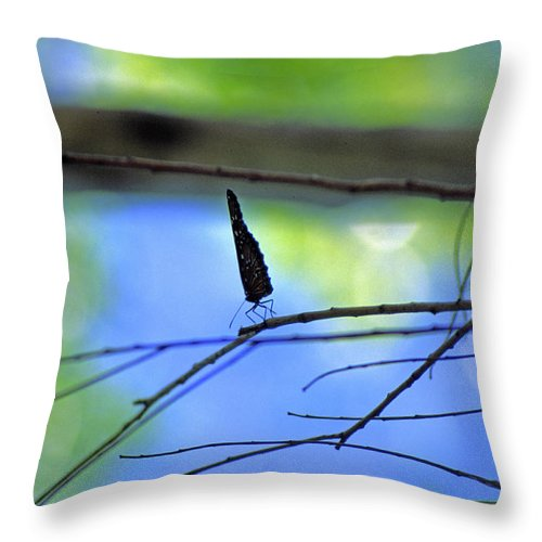 Butterfly Throw Pillow featuring the photograph Life On The Edge by Randy Oberg