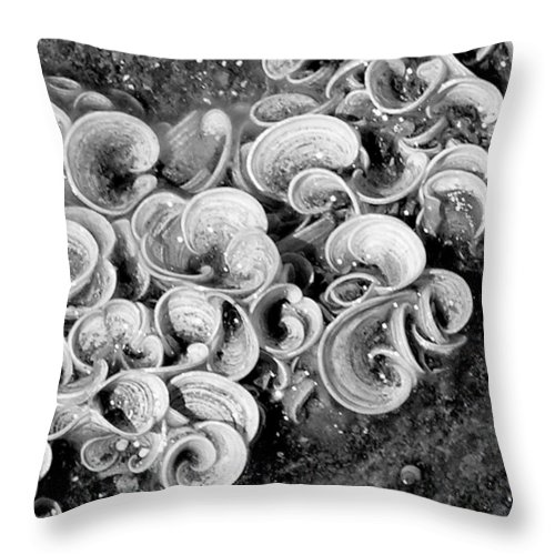 Mary Deal Throw Pillow featuring the photograph Life On The Rocks In Black And White by Mary Deal