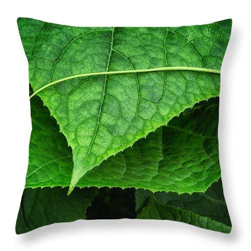 Cindy Archbell Throw Pillow featuring the photograph Lifes A Journey by Cindy Archbell