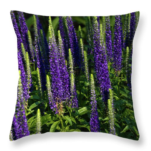 Lifting Throw Pillow featuring the photograph Lifting To The Stars by Douglas Barnett